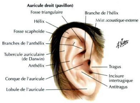 signification piercing oreille